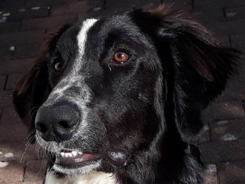 Hund Ali