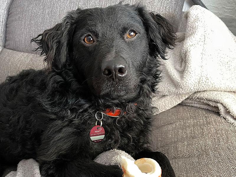 Hund-adoptieren-in-Corona-Zeit_Tierschutzhund-Basti_Silvia-Reinheimer