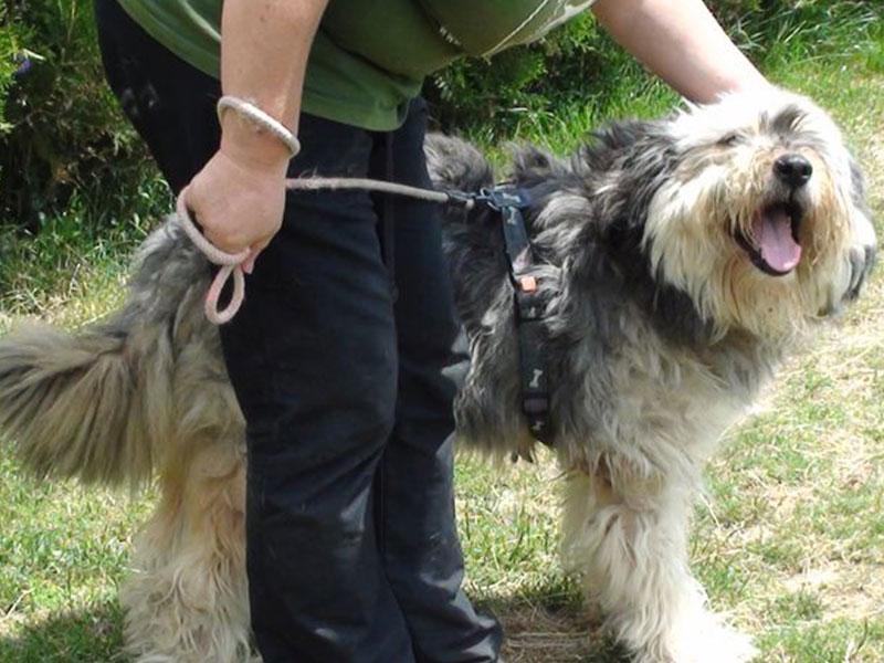 shelta_Notfalltier_Hund-Moccio_Befreite-Hunde-e.V