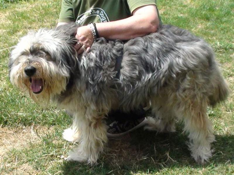 shelta_Notfalltier_Hund-Moccio_Befreite-Hunde-e.V_001