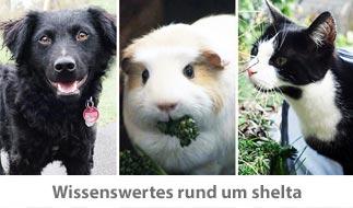 Wissenswertes-shelta_Hund-Meerscheinchen-Katze_Sidebar