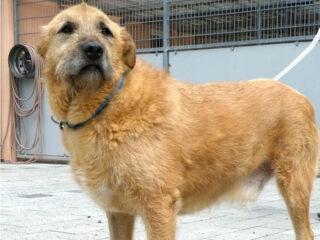 Tierschutzhund Keno mit Handicap, drei Beinen. © Tierheim Hanau