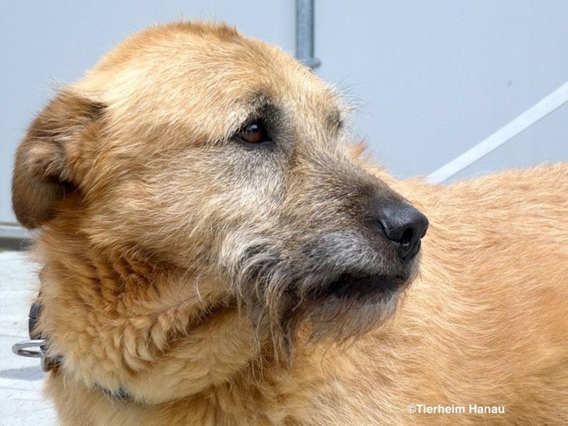 Tierschutz_Hund_Keno_Tierheim-Hanau_1