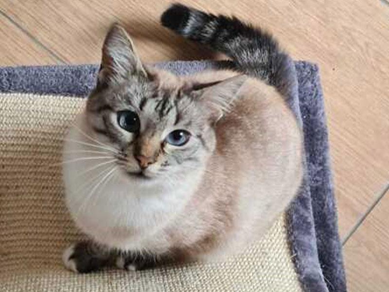 Katze Felicity