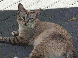 Katze Felicity liegt auf dem Boden